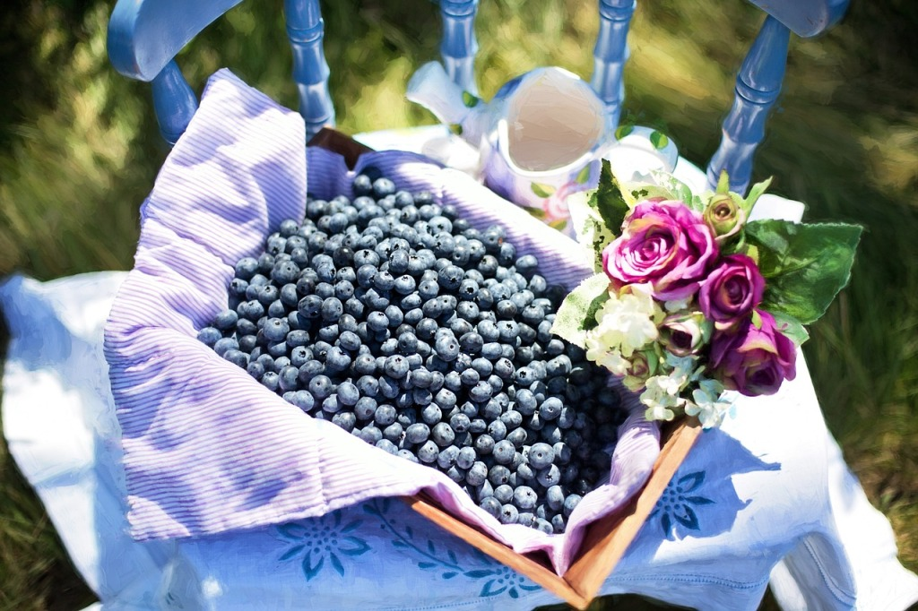 blueberries-870515_1280