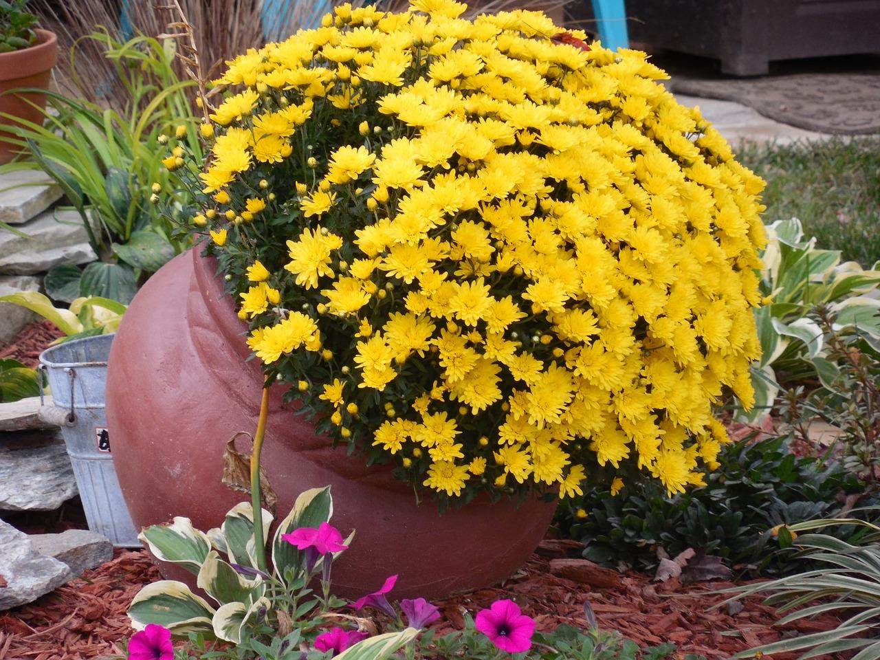 kvetinac-na-zahrade