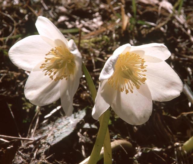 flower-89647_640